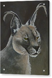 Caracal Cat Acrylic Print