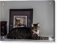 Cat At Rest Acrylic Print