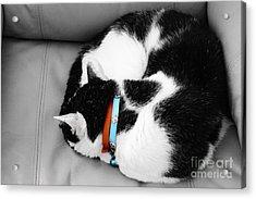 cat Acrylic Print by Bobby Mandal
