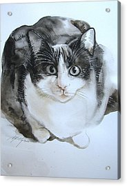 Cat In Black And White  Acrylic Print by Alfred Ng