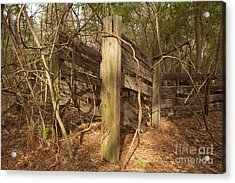 Catchpen Acrylic Print by Russell Christie