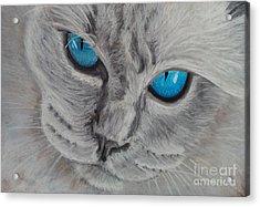 Cat's Eyes Acrylic Print
