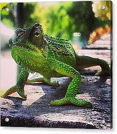#chameleon #animal #nature #green #cool Acrylic Print