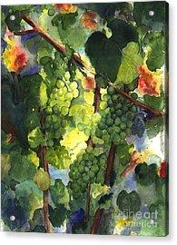 Chardonnay Au Soliel Acrylic Print by Maria Hunt