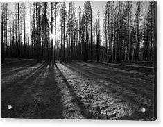 Charred Silence - Yosemite Rim Fire 2013 Acrylic Print