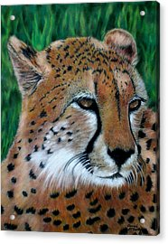 Cheetah Acrylic Print by Carol McCarty