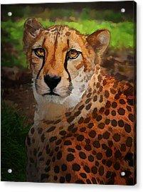 Cheetah Mama Acrylic Print