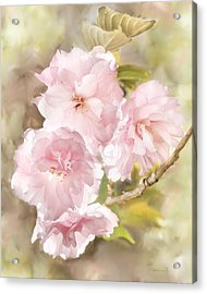 Cherry Blossoms Acrylic Print by Francesa Miller