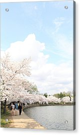 Cherry Blossoms - Washington Dc - 01131 Acrylic Print by DC Photographer
