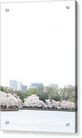 Cherry Blossoms - Washington Dc - 011316 Acrylic Print by DC Photographer