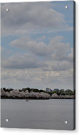 Cherry Blossoms - Washington Dc - 011324 Acrylic Print by DC Photographer