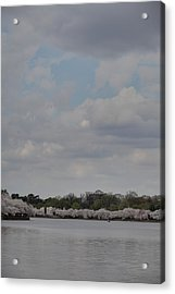 Cherry Blossoms - Washington Dc - 011333 Acrylic Print by DC Photographer