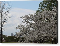 Cherry Blossoms - Washington Dc - 011344 Acrylic Print by DC Photographer