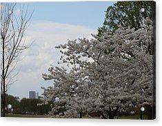 Cherry Blossoms - Washington Dc - 011345 Acrylic Print by DC Photographer
