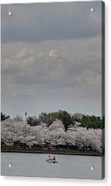 Cherry Blossoms - Washington Dc - 01139 Acrylic Print by DC Photographer