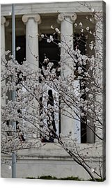 Cherry Blossoms With Jefferson Memorial - Washington Dc - 01131 Acrylic Print