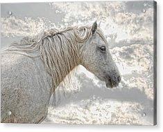 cheval de la Camargue Acrylic Print by Joachim G Pinkawa