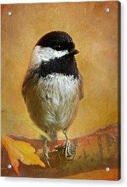Chickadee Acrylic Print by Angie Vogel