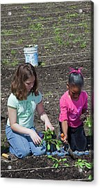 Children At Work In A Community Garden Acrylic Print