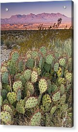 Chisos Mountains In Distance Seen From Acrylic Print by Witold Skrypczak