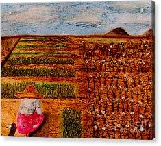 Chive Harvest Acrylic Print by Ayasha Loya