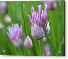 Acrylic Print featuring the photograph Chives by Gene Cyr