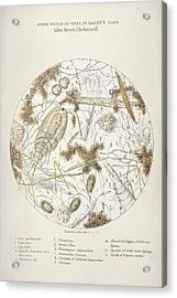 Cholera Epidemic Research Acrylic Print by British Library