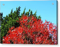 Christmas Color Acrylic Print by David  Norman