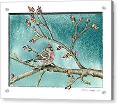 Christmas Redpoll Acrylic Print by Gina Gahagan