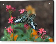 Clipper Butterfly 6150-052513-1cr Acrylic Print