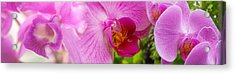 Close-up Of Purple Passion Flowers Acrylic Print by Panoramic Images