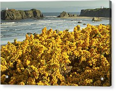 Coastal Views, Bandon, Oregon Acrylic Print