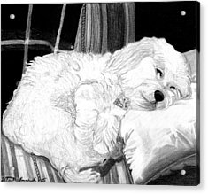 Cockapoo Dog Portrait   Acrylic Print by Olde Time  Mercantile