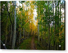 Colorado Fall Hike Acrylic Print