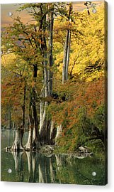 Colorful Cypress Acrylic Print