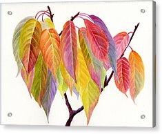 Colorful Fall Leaves Acrylic Print by Sharon Freeman