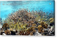 Colorful Tropical Reef Acrylic Print