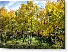 Colors Colorado Acrylic Print by Baywest Imaging