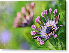 Colors Of Spring Acrylic Print by Darren Fisher