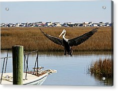 Coming Aboard Acrylic Print by Paulette Thomas