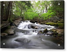 Cotton Hollow Acrylic Print