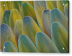 Covert Wing Feathers Of The Camelot Acrylic Print by Darrell Gulin