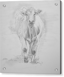 Cow Drawing Acrylic Print