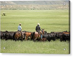 Cowboys Herding On A Cattle Ranch Acrylic Print by Jim West