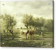 Cows In A Puddle, Gerard Bilders Acrylic Print