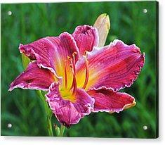 Crimson Day Lily Acrylic Print