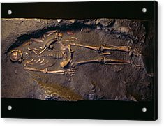 Cro-magnon Man Fossil Acrylic Print by Pascal Goetgheluck/science Photo Library