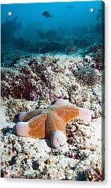 Cushion Star Starfish Acrylic Print by Georgette Douwma