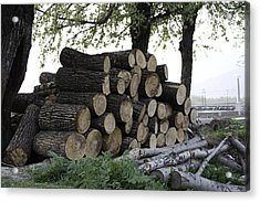 Cut Tree Trunks Piled Up For Further Processing After Logging Acrylic Print