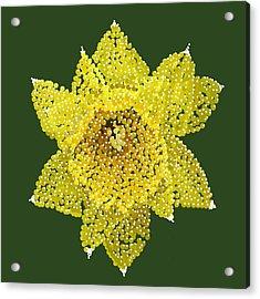 Daffodil Bedazzled Acrylic Print by R  Allen Swezey